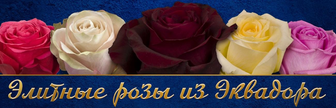 Элитные розы из Эквадора