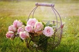 Цветы со всех каталогов
