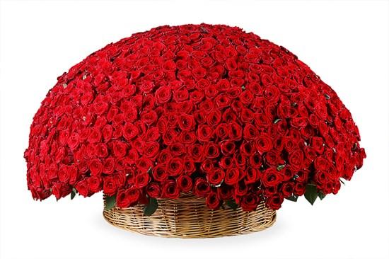 1001 роза в корзине - фото 4812