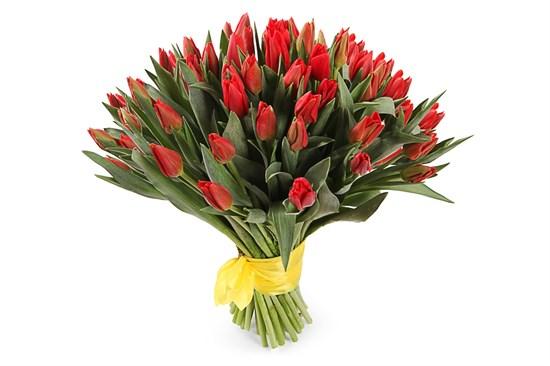 Букет 51 королевский тюльпан, красные - фото 5075