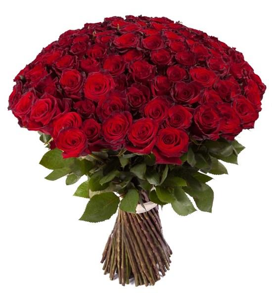 Букет из 101 красной розы Ред Париж - фото 7749