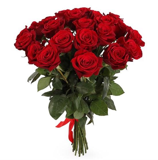 Букет из 25 красных роз Фридом - фото 7753