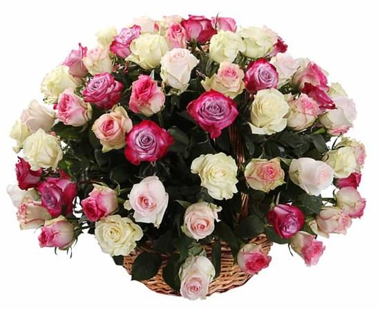 Букет Кроткий румянец (101 роза в корзине)  - фото 7807
