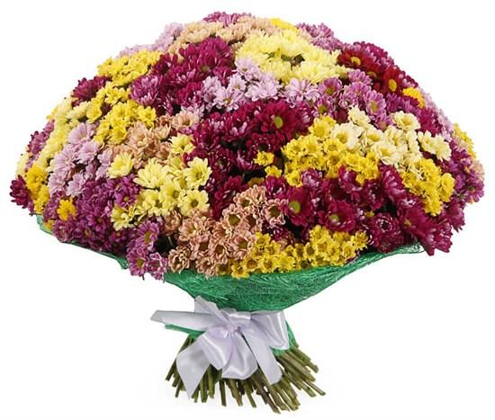 Букет 151 хризантема Сантини - фото 7830