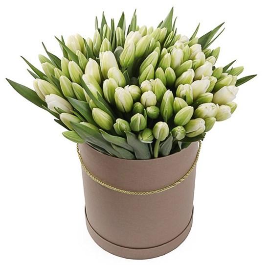 101 королевский тюльпан в коричневой коробке, белые - фото 7833