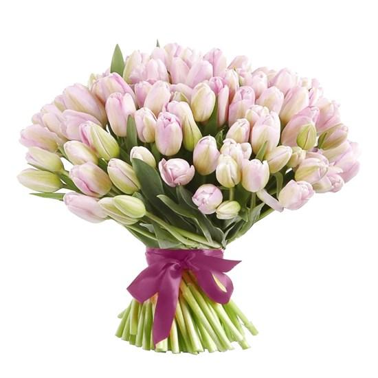 Букет 101 королевский тюльпан, жемчужные - фото 7840