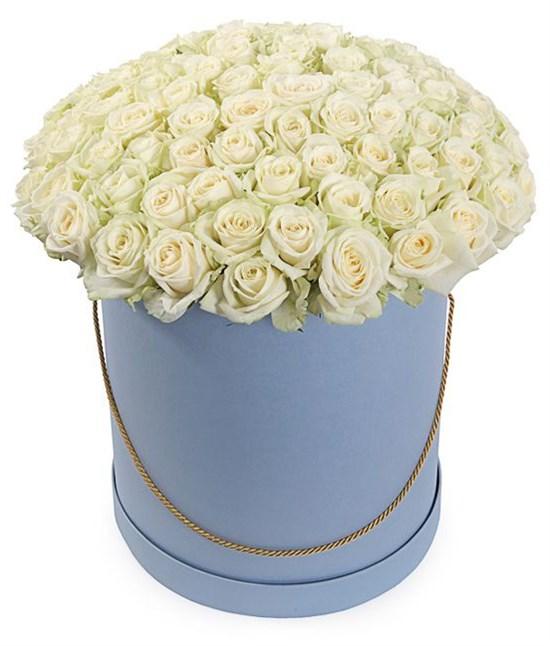 101 роза Аваланш в шляпной коробке - фото 7846