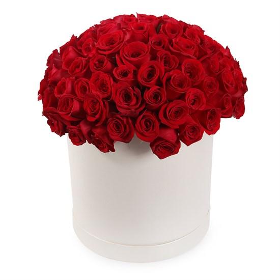 101 роза Фридом в шляпной коробке - фото 7859