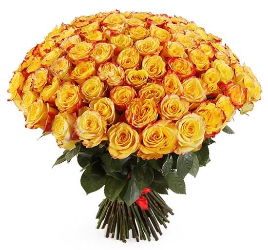 Букет 101 роза Хай Еллоу - фото 7860