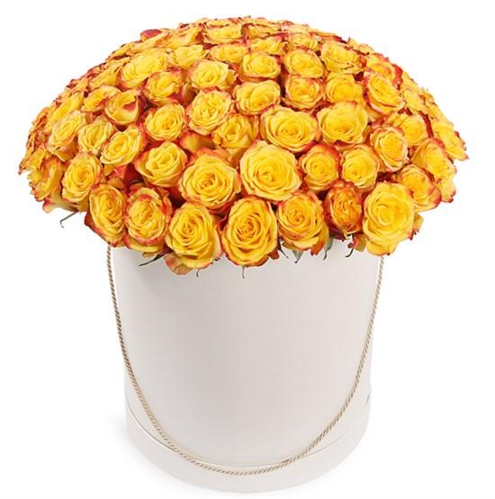 101 роза Хай Еллоу в шляпной коробке - фото 7861