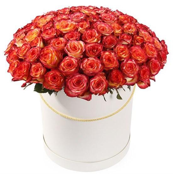 101 роза Хай Мэджик в шляпной коробке - фото 7863