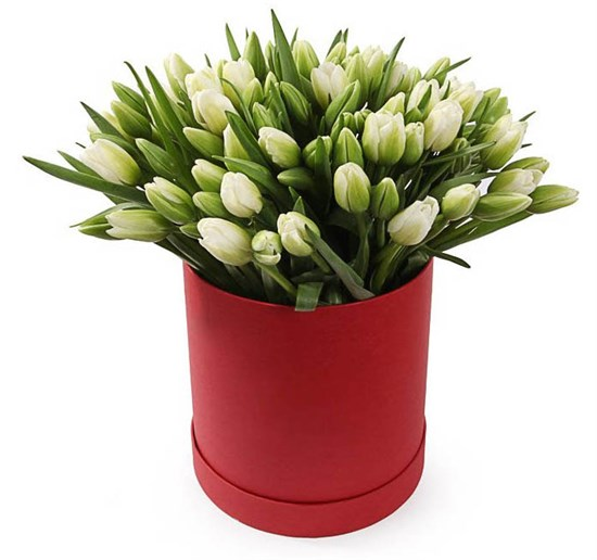 101 тюльпан в коробке, белые - фото 7870