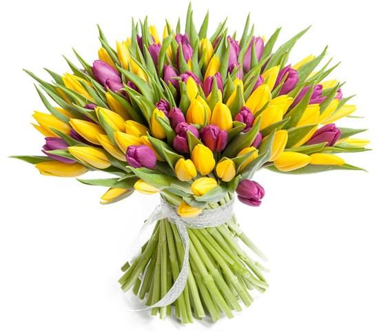 Букет 101 тюльпан, желто-фиолетовые - фото 7878