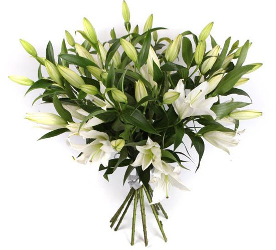 Букет 11 лилий Белая красавица - фото 7933
