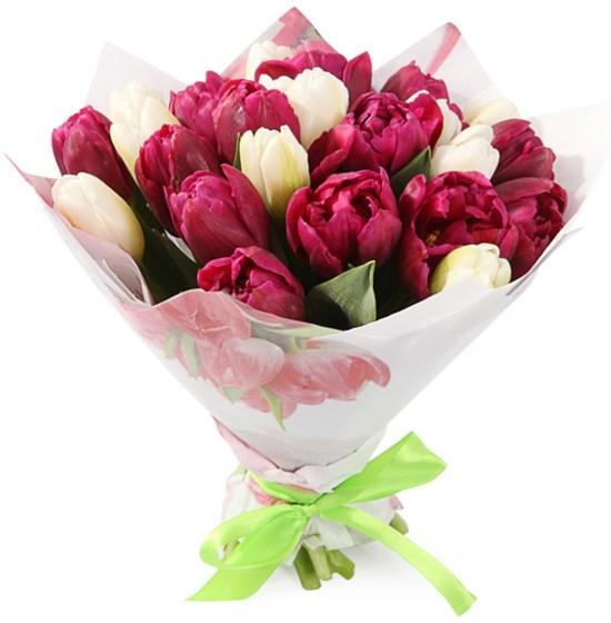 Букет 25 королевских тюльпанов, малиновый микс - фото 7981
