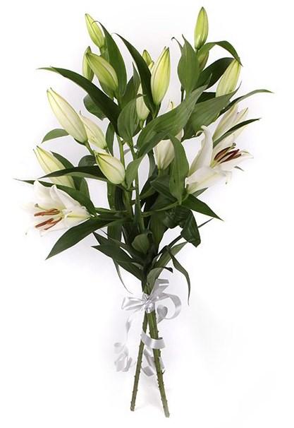Букет 3 лилии Белая красавица - фото 8013