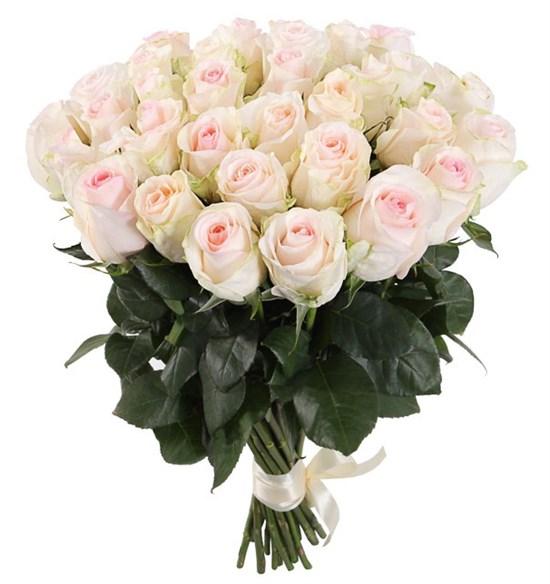 Букет 31 роза Сеньорита - фото 8018