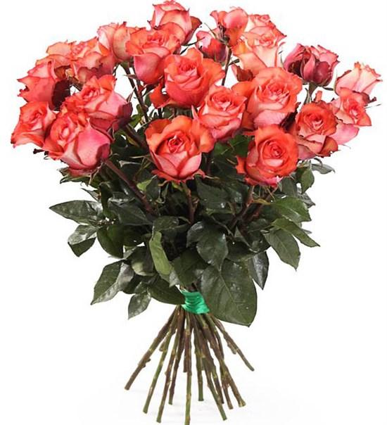 Букет 25 роз Игуана, коралловые - фото 8130