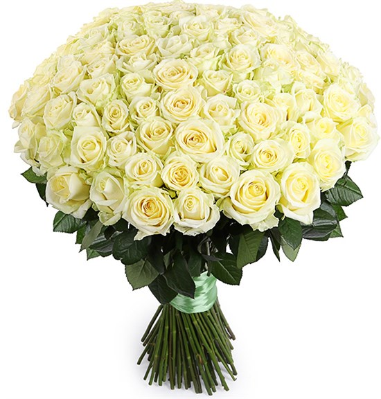 Букет 101 роза Аваланш 60/70 см - фото 8156