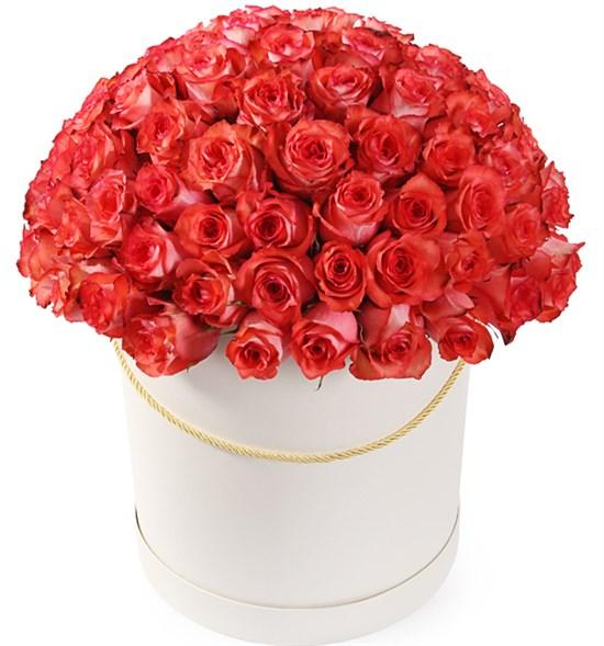 101 роза Игуана в шляпной коробке - фото 8160