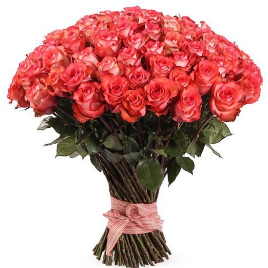 Букет 101 роза Игуана, коралловая - фото 8161