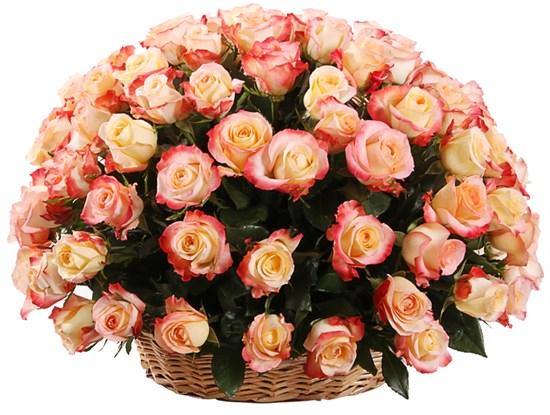Букет 101 роза Кабаре в корзине - фото 8163