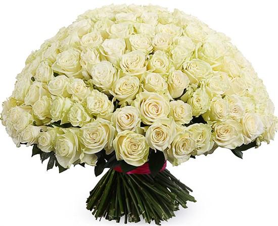 Букет 201 роза Мондиаль - фото 8168