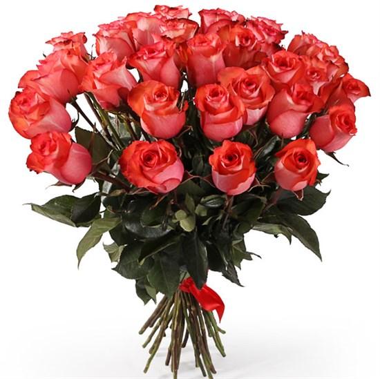 Букет 35 роз Игуана, коралловые - фото 8171