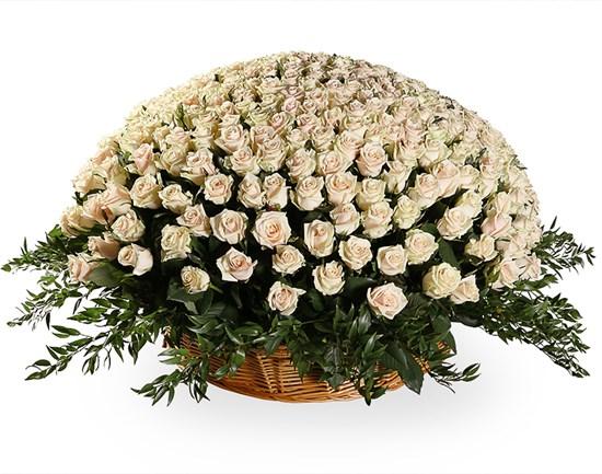 Букет 501 роза Талея в корзине - фото 8202