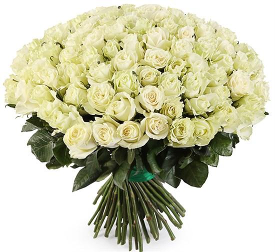 Букет 101 роза Мондиаль - фото 8246