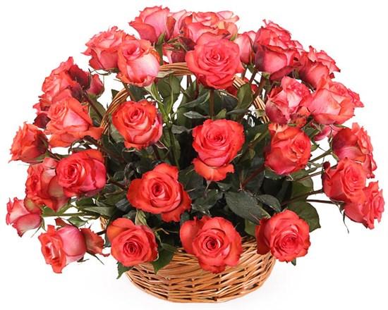 51 роза Игуана в корзине - фото 8256