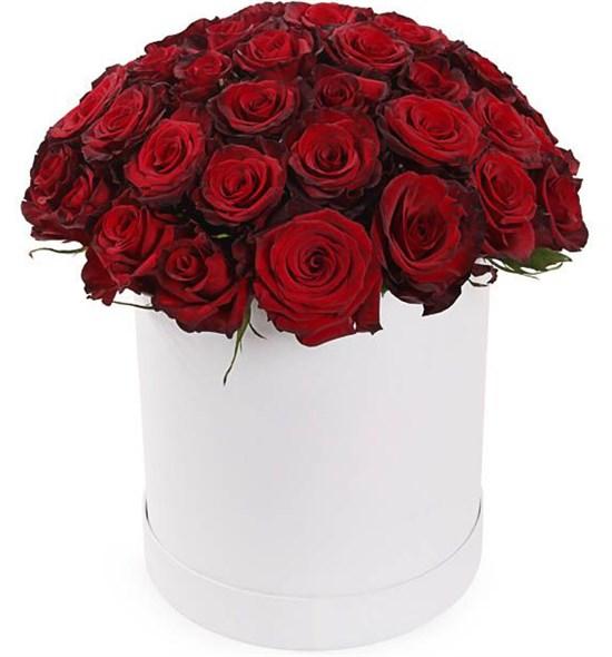51 роза Ред Париж в шляпной коробке - фото 8276