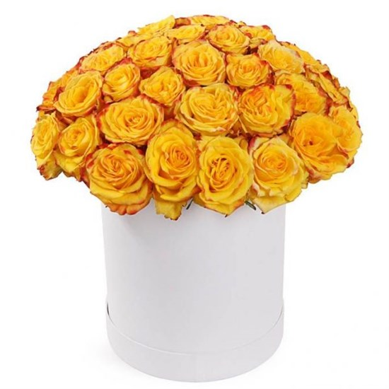 51 роза Хай Еллоу в белой шляпной коробке - фото 8282