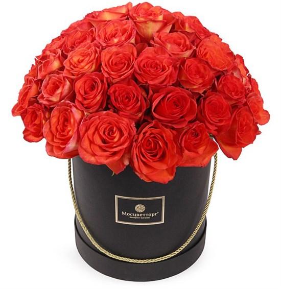 51 роза Хай Мэджик в шляпной коробке - фото 8286