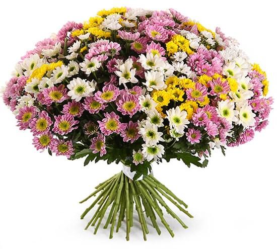 Букет 51 хризантема Сантини - фото 8310