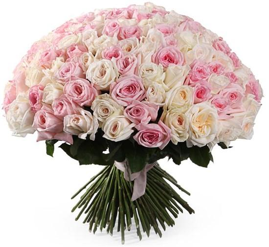 Букет Любовный нектар 151 роза О'Хара - фото 8422