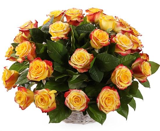 35 роз Хай Еллоу в корзине - фото 8538
