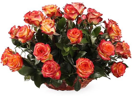 35 роз Хай Мэджик в корзине - фото 8539