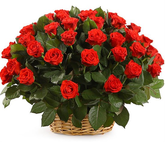 51 роза в корзине, 50 см - фото 8544