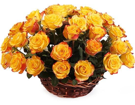 51 роза Хай Еллоу в корзине - фото 8547