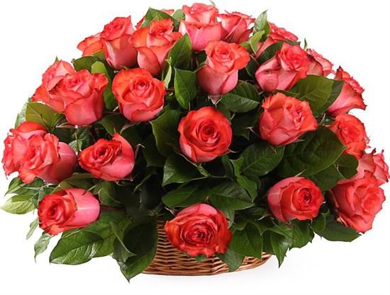 35 роз Игуана в корзине - фото 8555