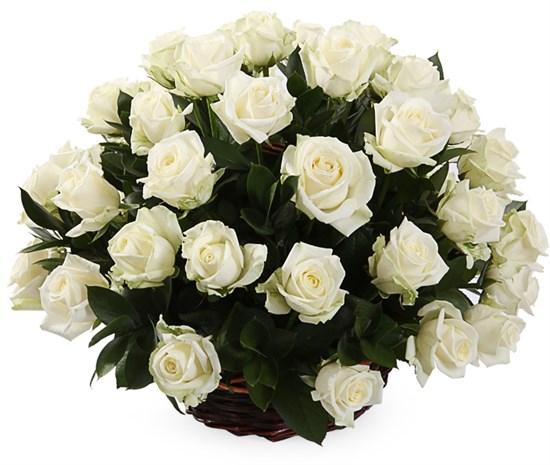 51 роза Аваланш в корзине - фото 8556