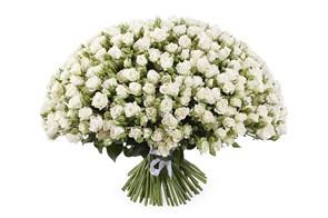 Букет 101 кустовая роза Сноуфлейк