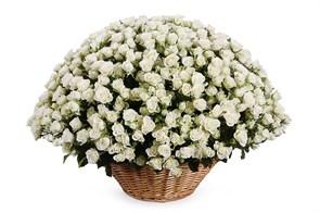 101 кустовая роза Сноуфлейк в корзине