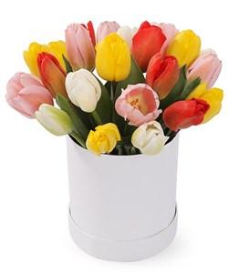 25 королевских тюльпанов в коробке, микс