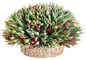 Композиция Весеннее головокружение (501 тюльпан)