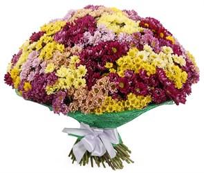 Букет 151 хризантема Сантини