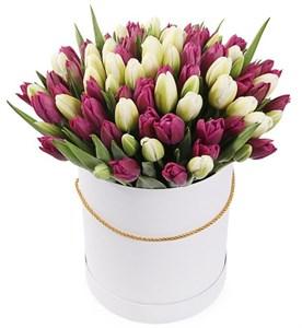 101 королевский тюльпан в белой коробке, бело-пурпурный микс