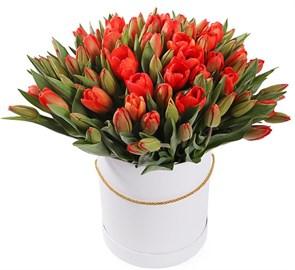 101 королевский тюльпан в белой коробке, красно-оранжевые