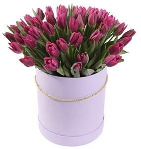 Букет 101 королевский тюльпан, бело-пурпурный микс